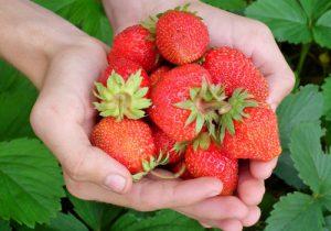 fruits in your garden